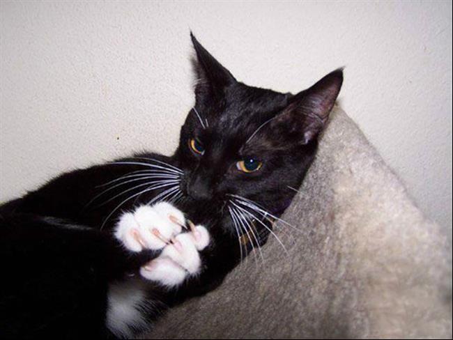 gato-plano-16