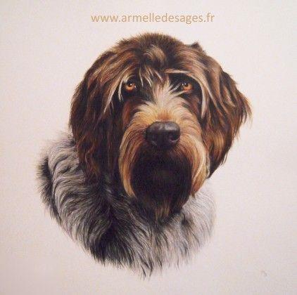 Dessin chien griffon / Armelle Desages artiste animalier en 2020 | Dessin chien, Chien griffon ...