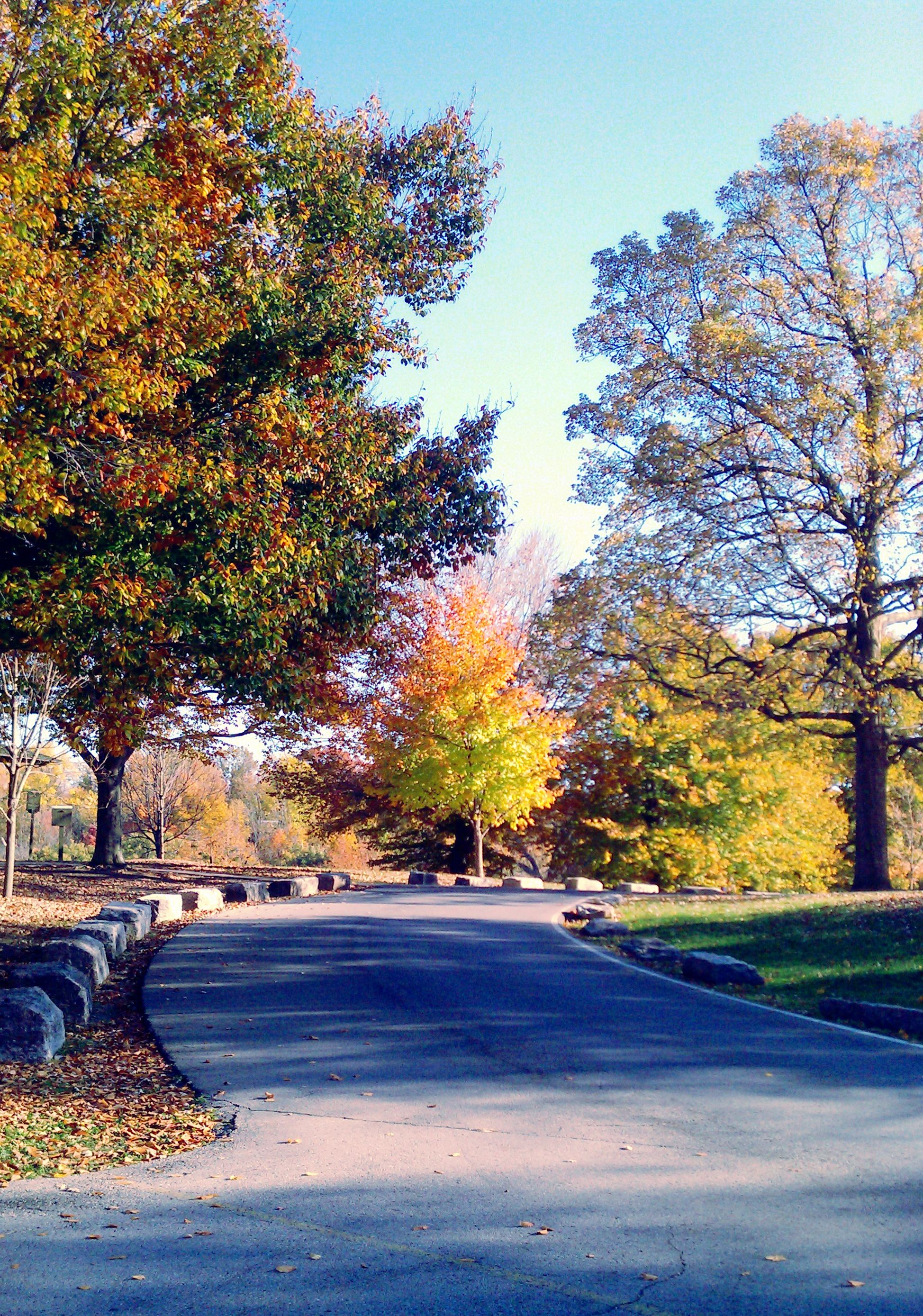 Driving through Cherokee Park at the top of Baringer Hill