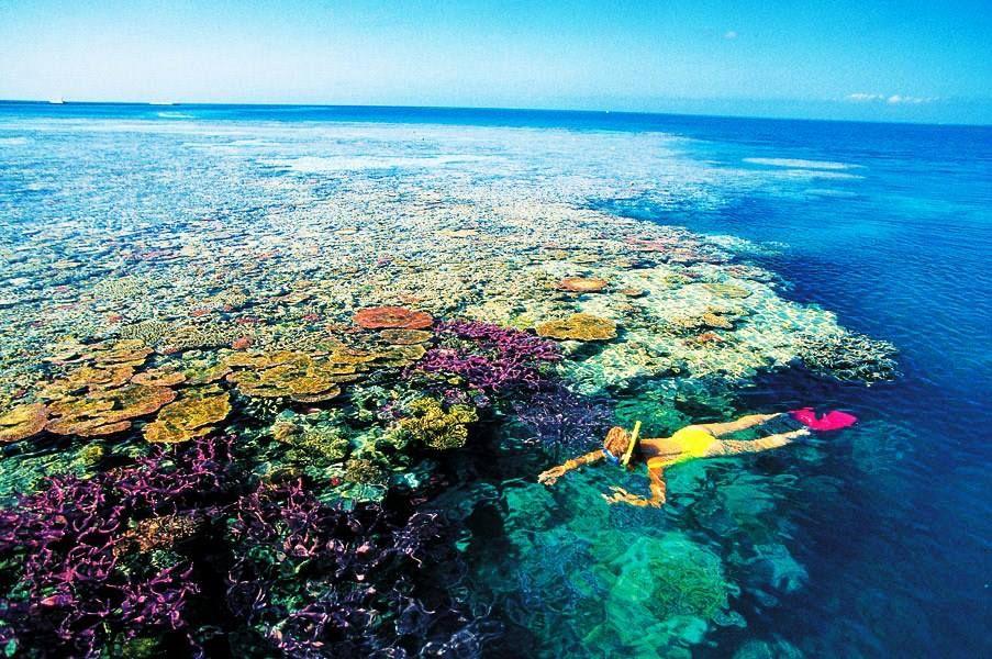 """Subscreve: www.trilhodemigalhas.com A Grande Barreira de Corais é um site de notável variedade e beleza na costa nordeste da Austrália.Ele contém a maior coleção do mundo de recifes de coral, com 400 tipos de coral, 1.500 espécies de peixes e 4.000 tipos de moluscos. Também tem grande interesse científico, como o habitat de espécies como o peixe-boi (""""vaca de mar"""") ea grande tartaruga verde, que estão ameaçadas de extinção."""