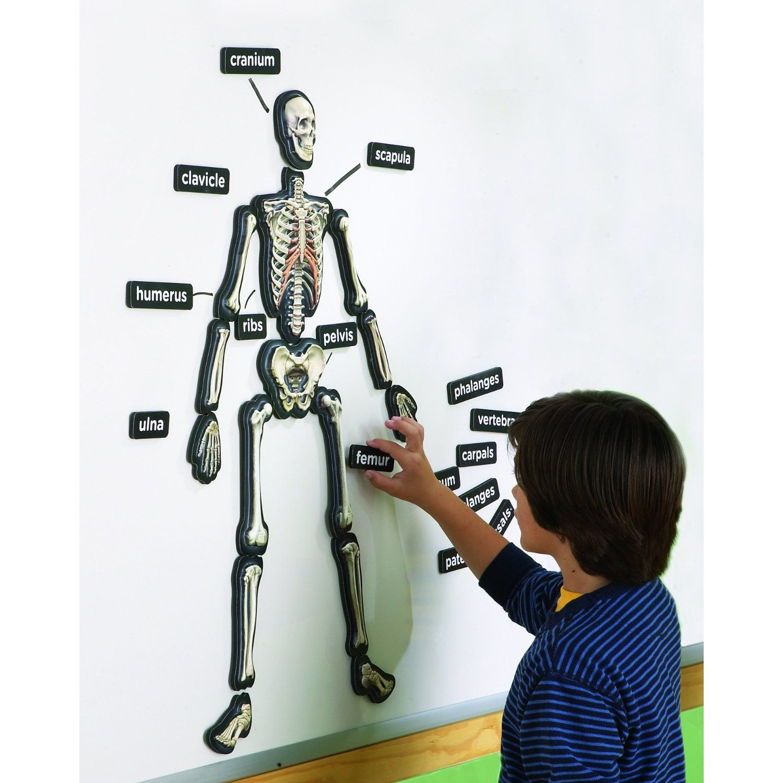 3 D Magnetic Demonstration Skeleton
