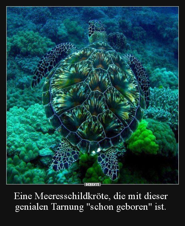 Eine Meeresschildkröte, die mit dieser genialen Tarnung.. | Lustige Bilder, Sprüche, Witze, echt lustig