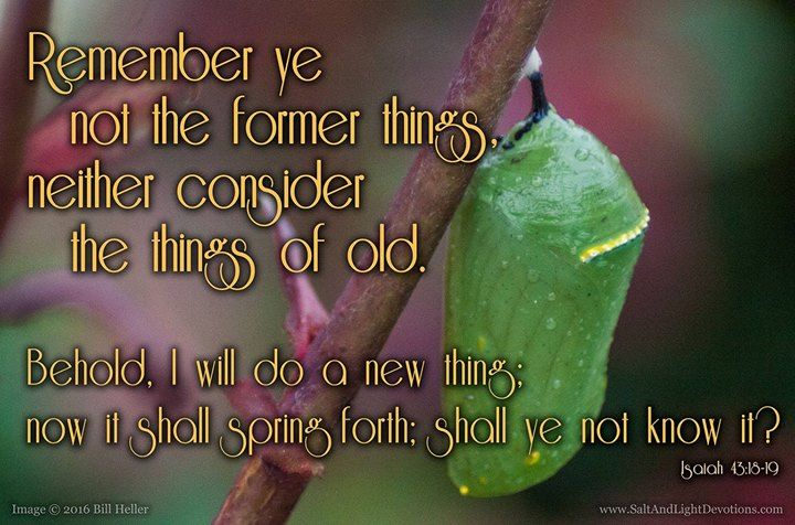 Remember ye not the former things neither consider the things of old. 19 Behold I will do a new thing; now it shall spring forth; shall ye not know it? I will even make a way in the wilderness and rivers in the desert.-- Isaiah 43:18-19 KJV  http://ift.tt/2dlIsJq  #Bible #inspirational