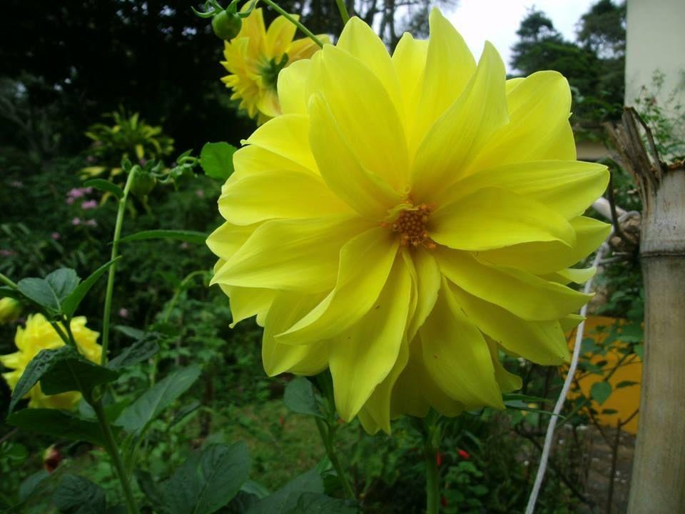 Flor linda!