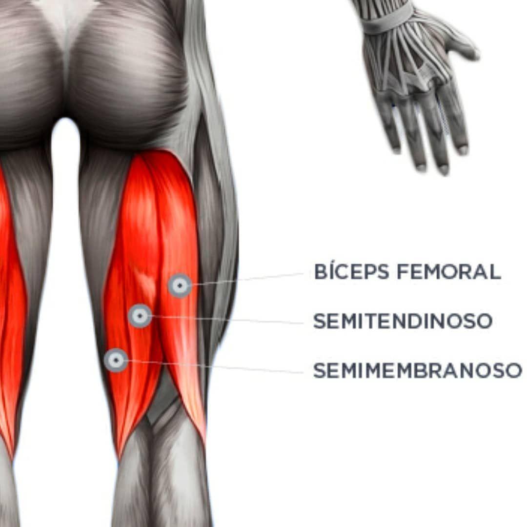 Biceps dolor femoral del