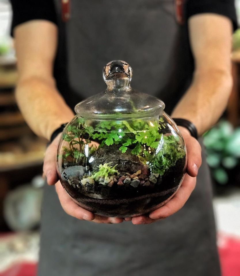 From Roosevelt S Terrarium Facebook Page Portland Oregon They