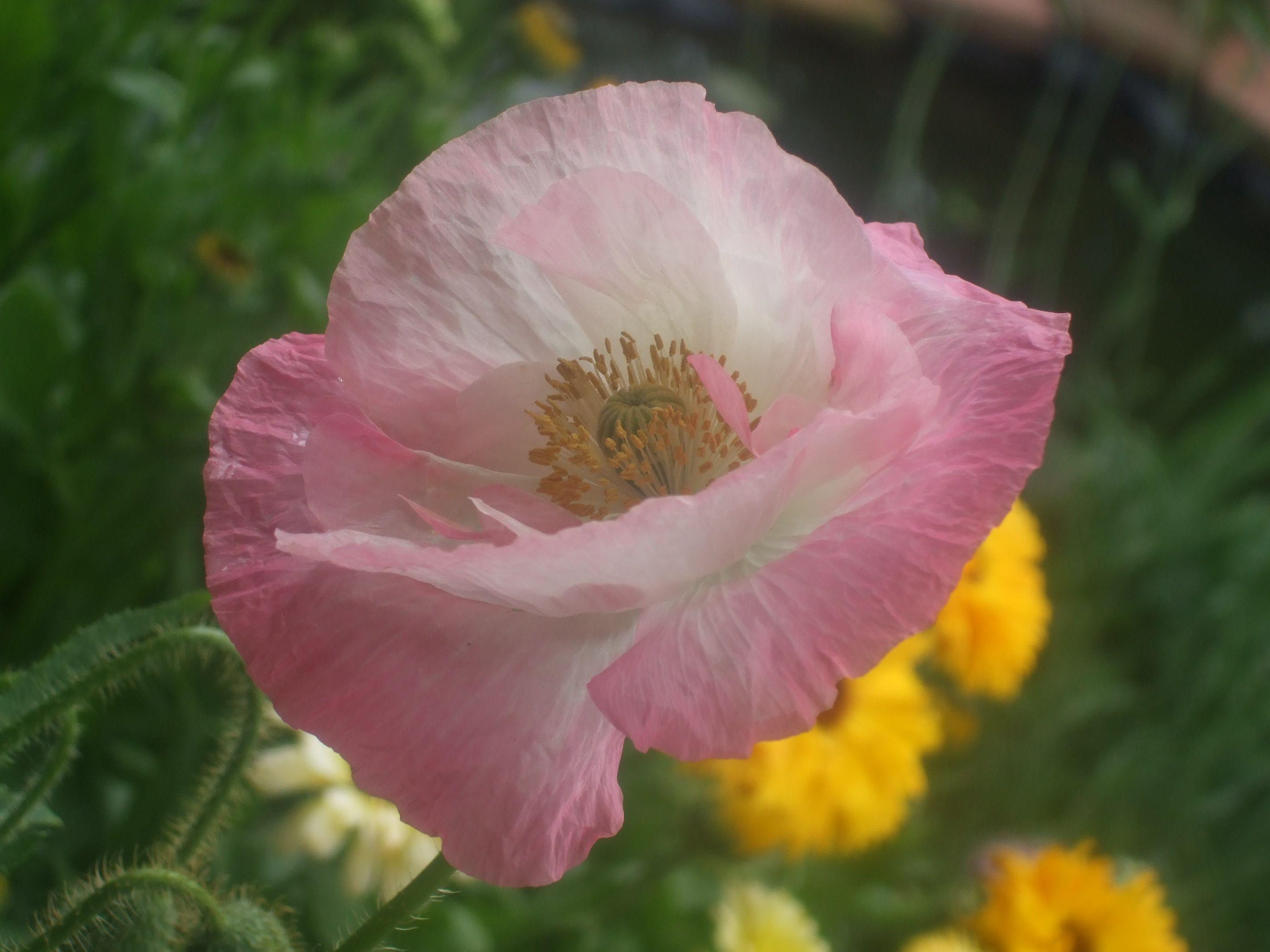 Paper Like Poppy My Garden Summer Flowers Garden Colour