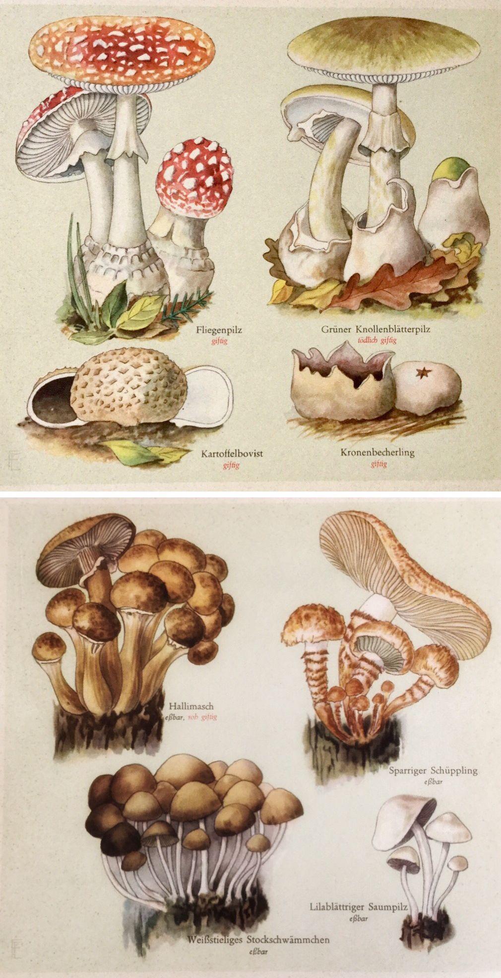 Vintage Mushroom Print A Printable Digital Image No 392 Etsy In 2020 Mushroom Art Vintage Illustration Vintage Mushroom