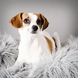 Amazing Grace Amazing Grace Pets Adoption Process