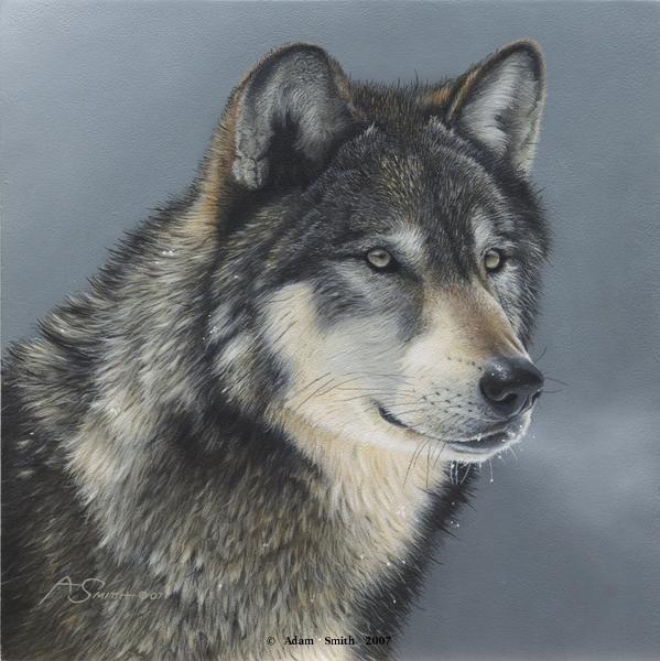 Amazing Wolf: Amazing Realistic American