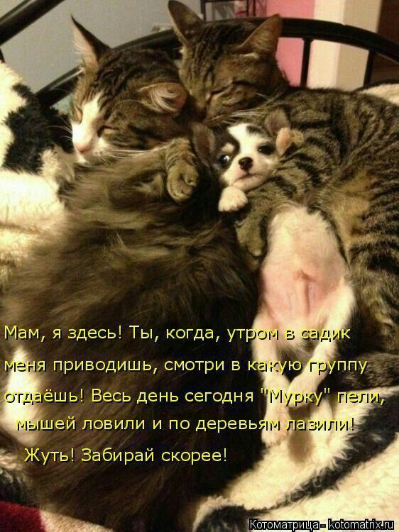 Пин от пользователя Татьяна Кравченко на доске Картинки с ...