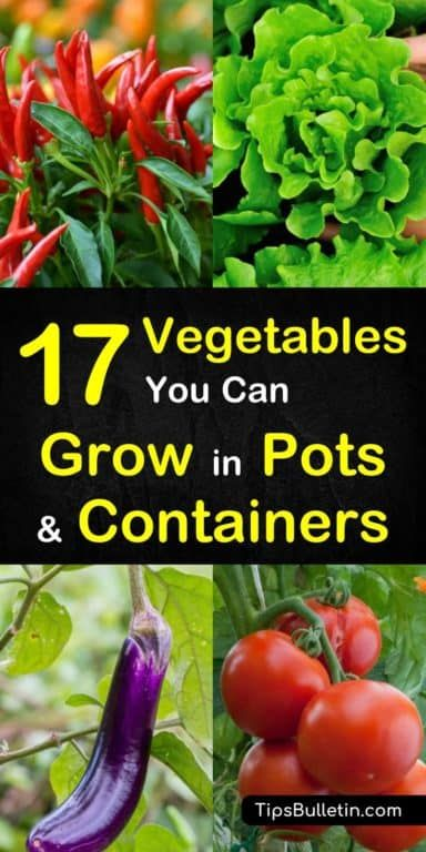 17 Vegetables that You Can Grow in Pots and Containers is part of Container gardening vegetables, Growing vegetables in pots, Home vegetable garden, Container vegetables, Growing vegetables, Food garden - If you'd love to cultivate fresh vegetables at home, but don't have a large yard, you can start container vegetable gardening with these 17 vegetable plants that can be grown in containers and pots