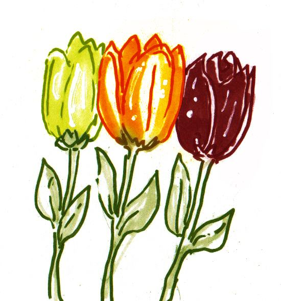 Spring Time Flowers Tulips Drawing Pic Sketch