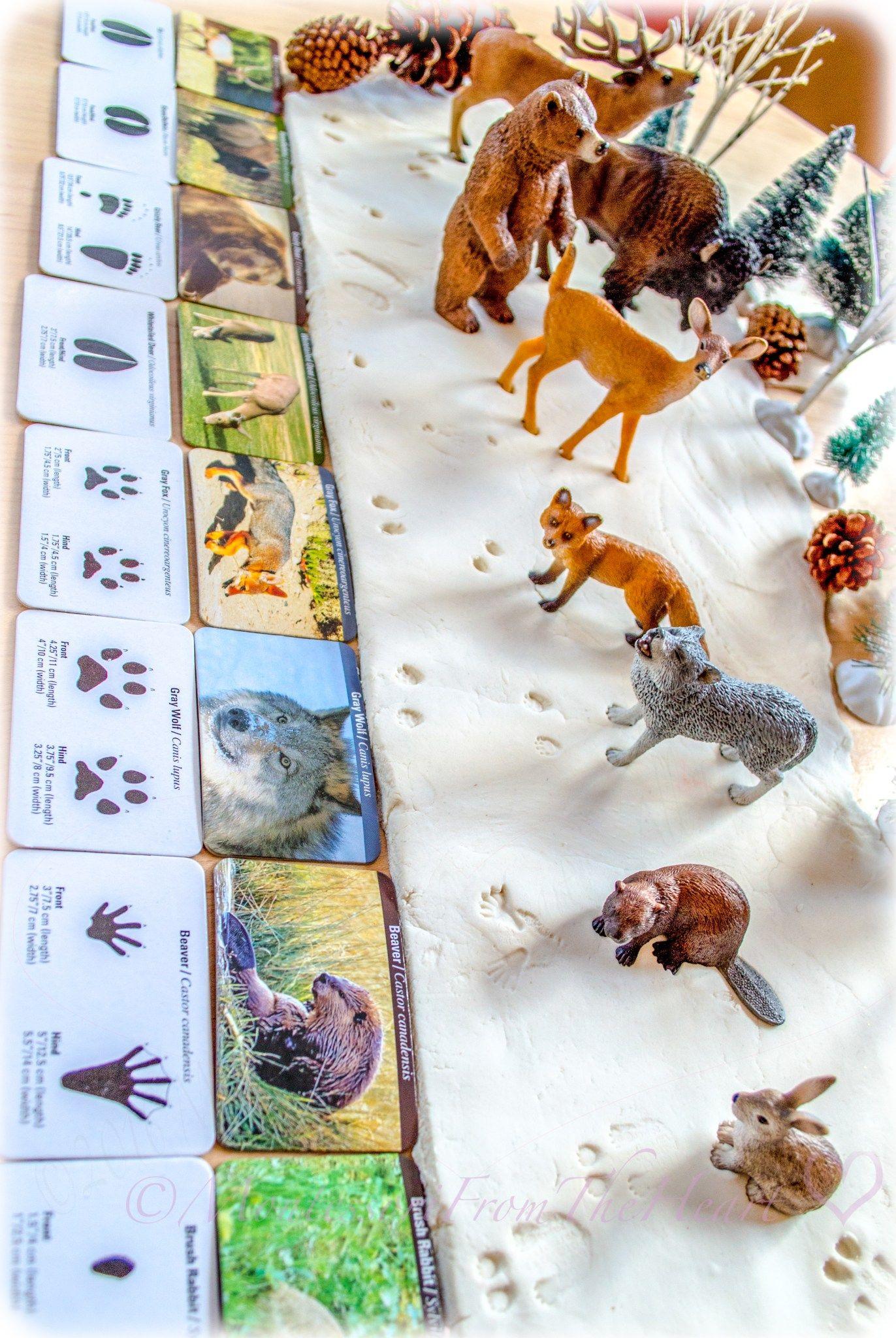 Animal Tracks Snow Playdough In
