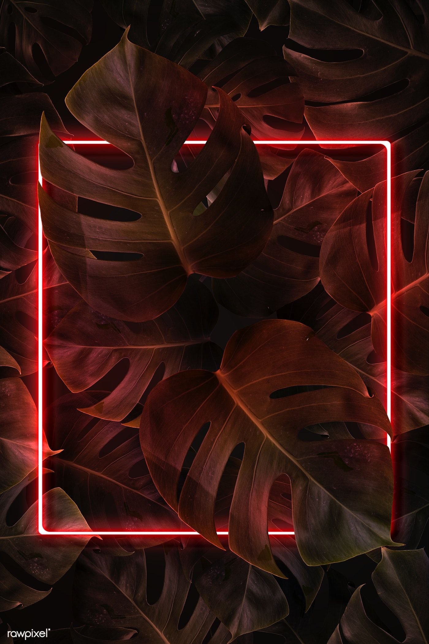 Download premium illustration of Red neon lights frame in a tropical