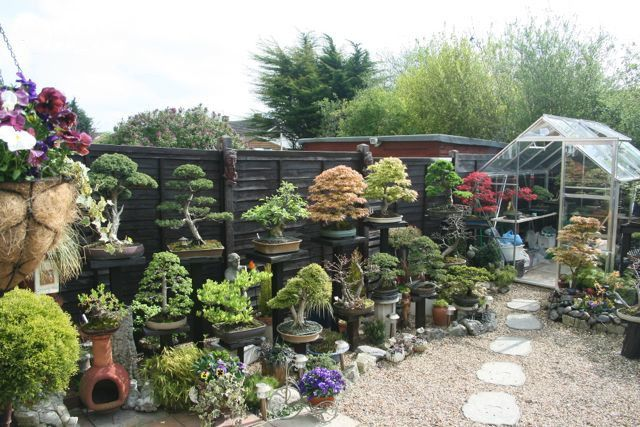 bonsai garden Oakwood Landscaping Pinterest Gardens Bonsai