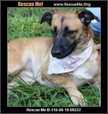 North Carolina German Shepherd Rescue Adoptions Rescueme Org