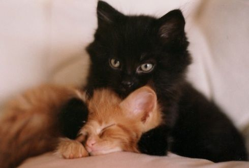Moes Allentown Pa >> My Kittens Casey Moe Kim Allentown Pa 4 5 13 What Makes You