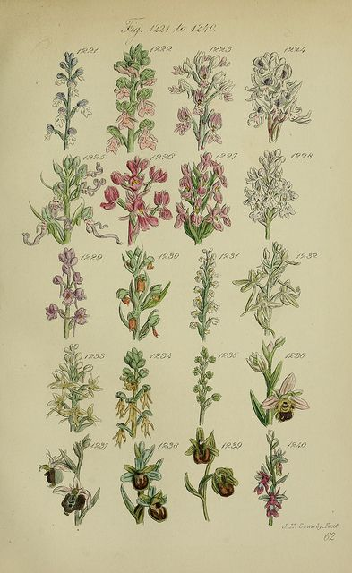 n306_w1150 by BioDivLibrary, via Flickr
