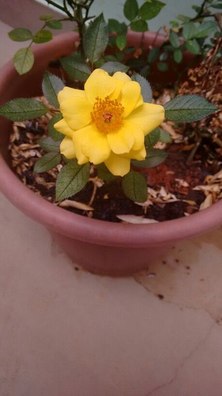 Flor amarela jardin