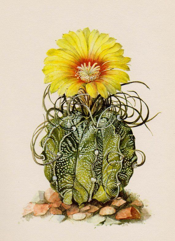 Cactus Print Vintage Botanical Print Flower Wall Art Cottage Desert ...