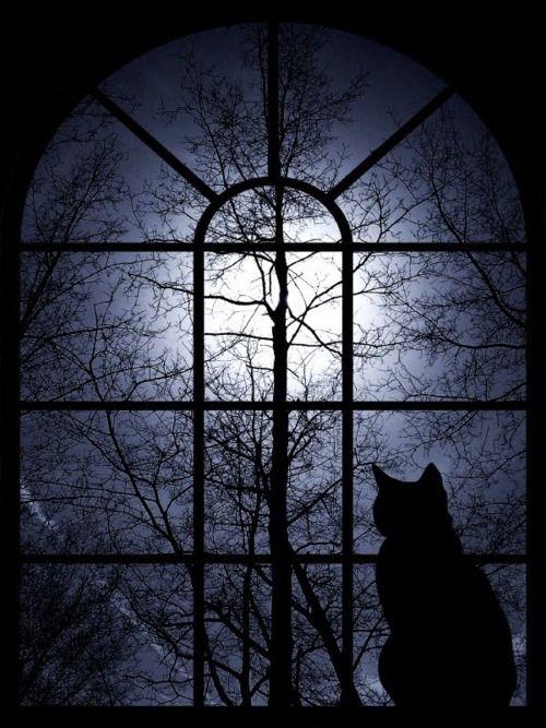 Enjoying the full moon.