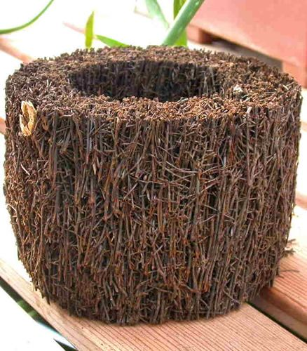 Diy Succulent Potting Mix Australia: Tree Fern Pots Are Used As Planters For Potting Orchids
