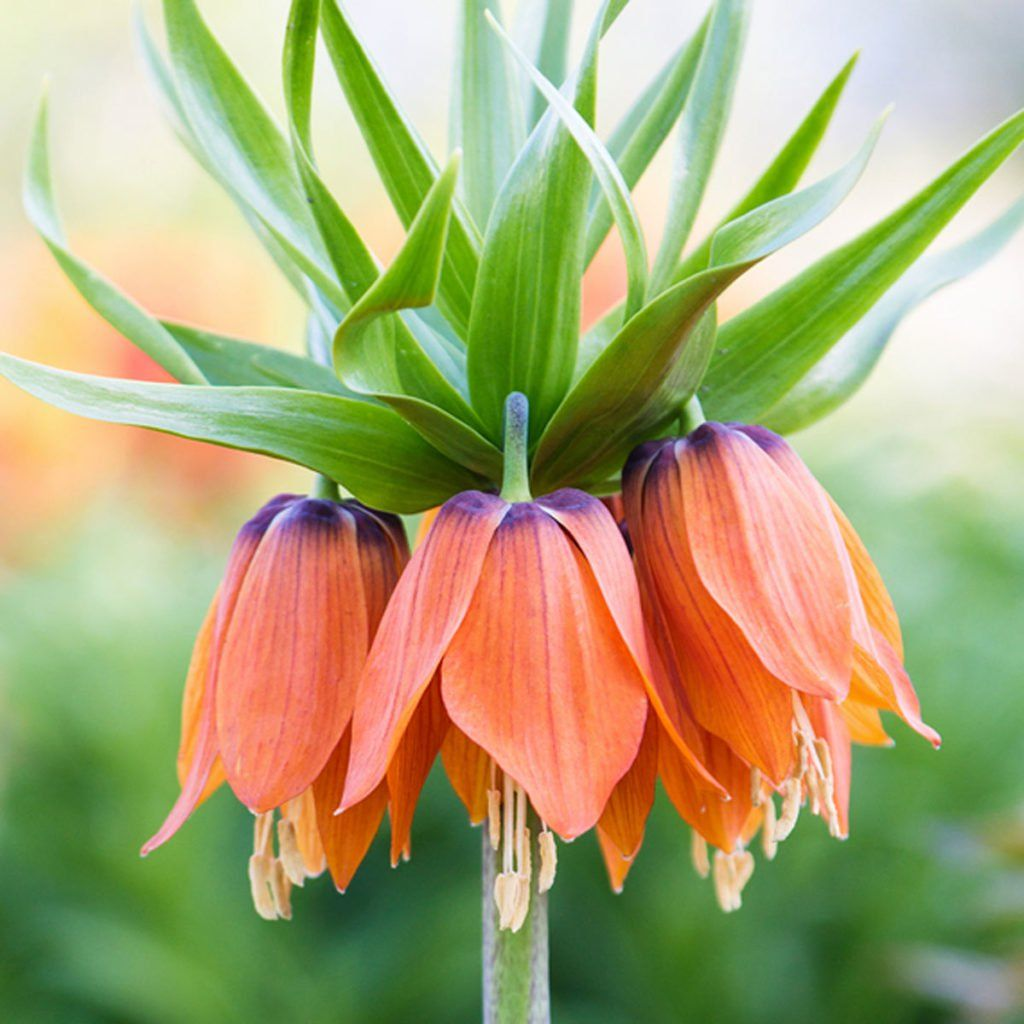 Plant These SpringBlooming Bulbs This Fall Plants