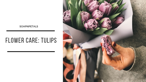 Flower Care Tulips Flower Care Types Of Tulips Flower Food