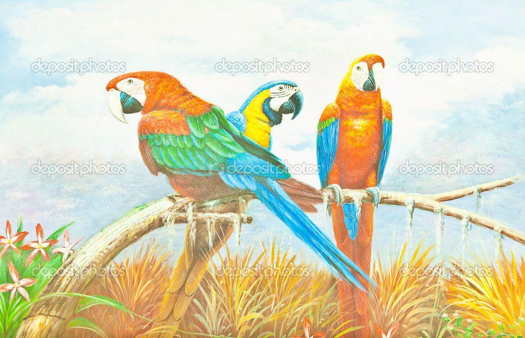 Bunte Ara Papagei Malen Stockbild 6660034 Papagei Zeichnung