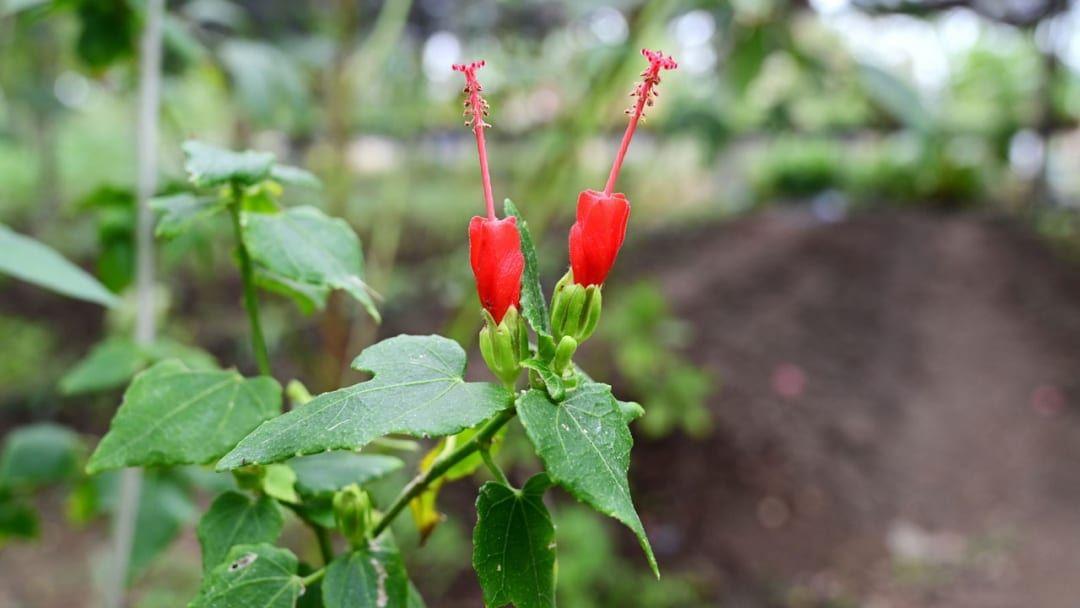 24 Pflanzen Die Viel Sonne Vertragen Und Wenig Wasser Brauchen Pflanzen Garten Ideen Garten