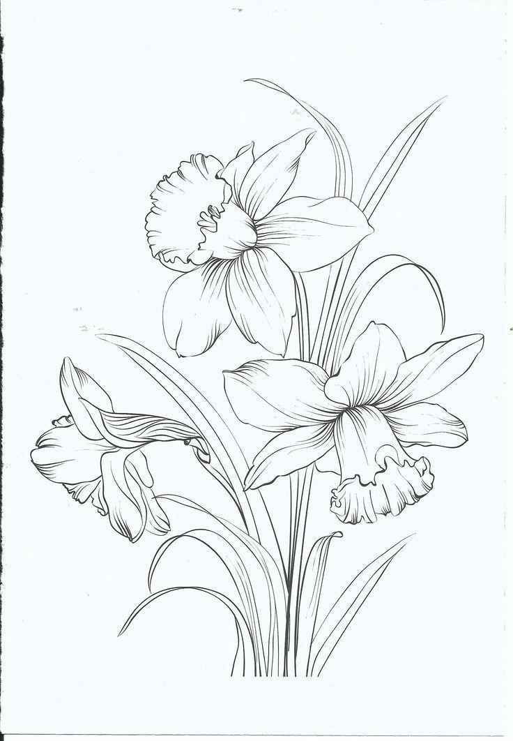 Malvorlage Pinterest Why6947 Bleistiftzeichnung Bleistiftzeichnungfixieren Bleistiftzeichnungen Bleistiftzeichnungenblumen Bleistif Blumen Bleistiftzeichnungen Blumen Zeichnen Und Malvorlagen