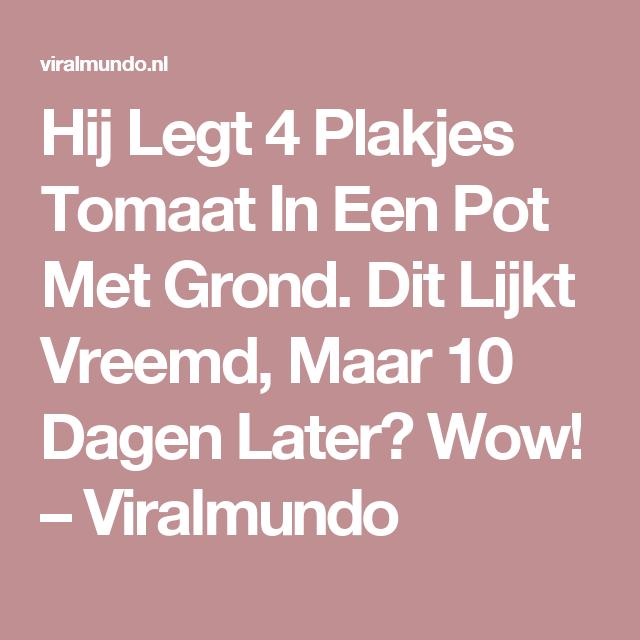 Hij Legt 4 Plakjes Tomaat In Een Pot Met Grond. Dit Lijkt Vreemd, Maar 10 Dagen Later? Wow! – Viralmundo