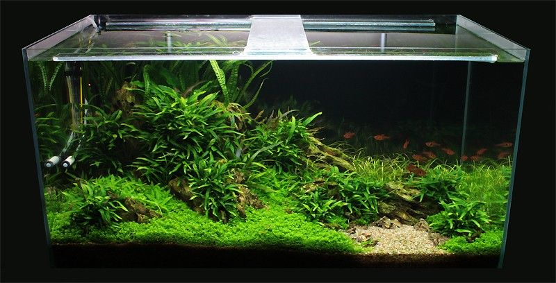 Attractive Aquascaping World Competition   Gallery   Wild Valley By Defaye Geoffrey