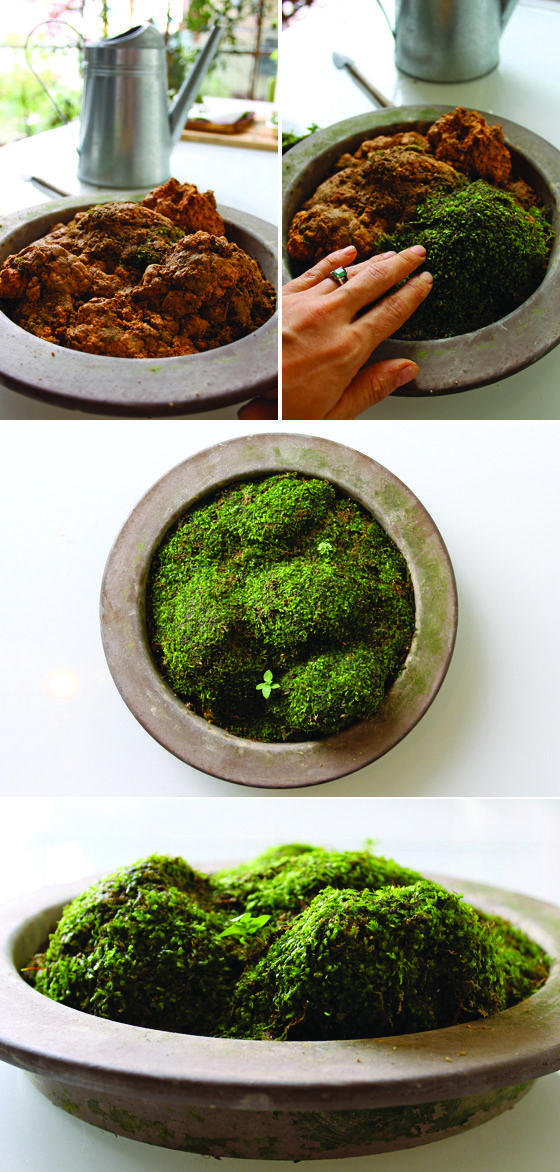 Make Your Own Moss Garden Moss Garden