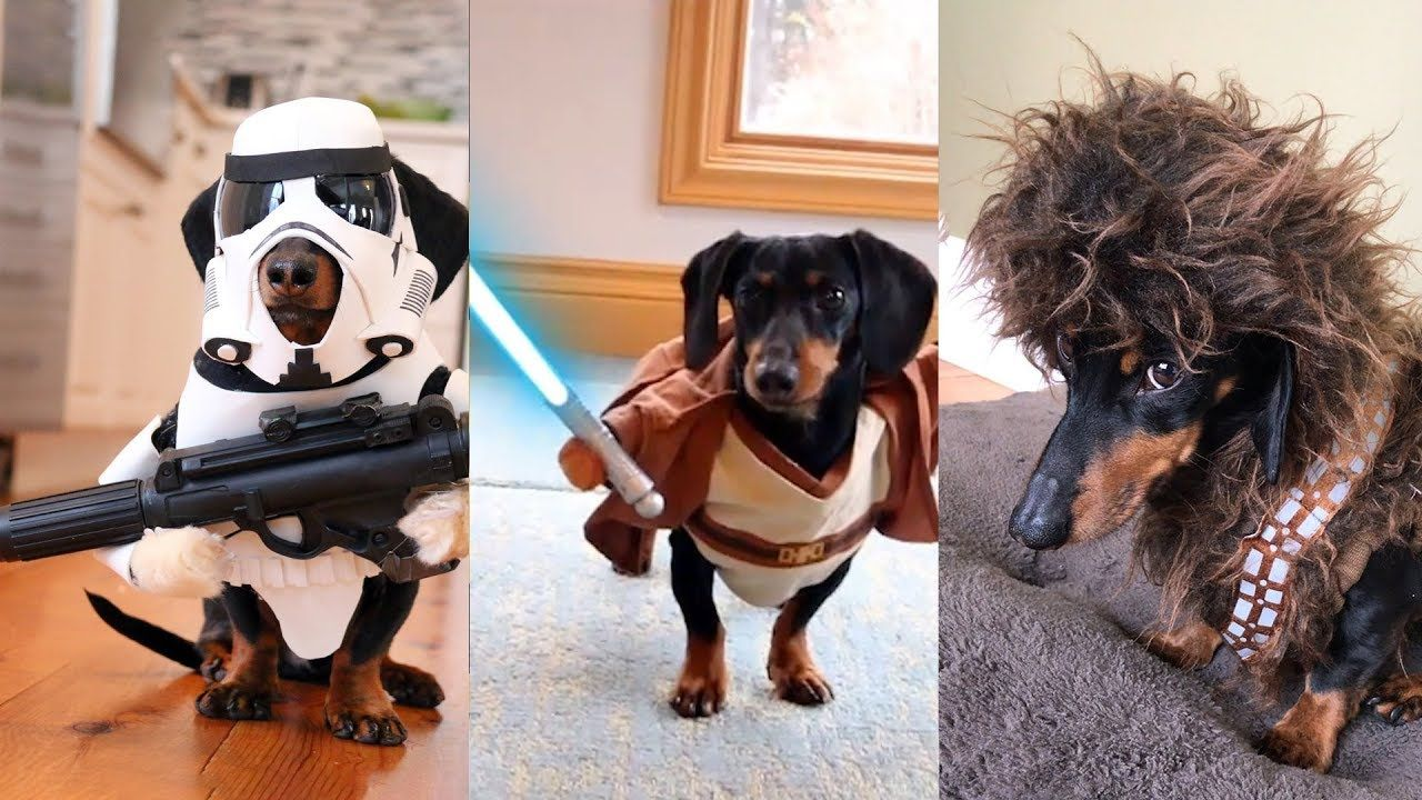Crusoe S Star Wars Dog Costumes Compilation Youtube Star Wars