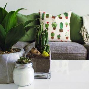 ▷ Die besten Zimmerpflanzen für ein wohnliches Ambiente