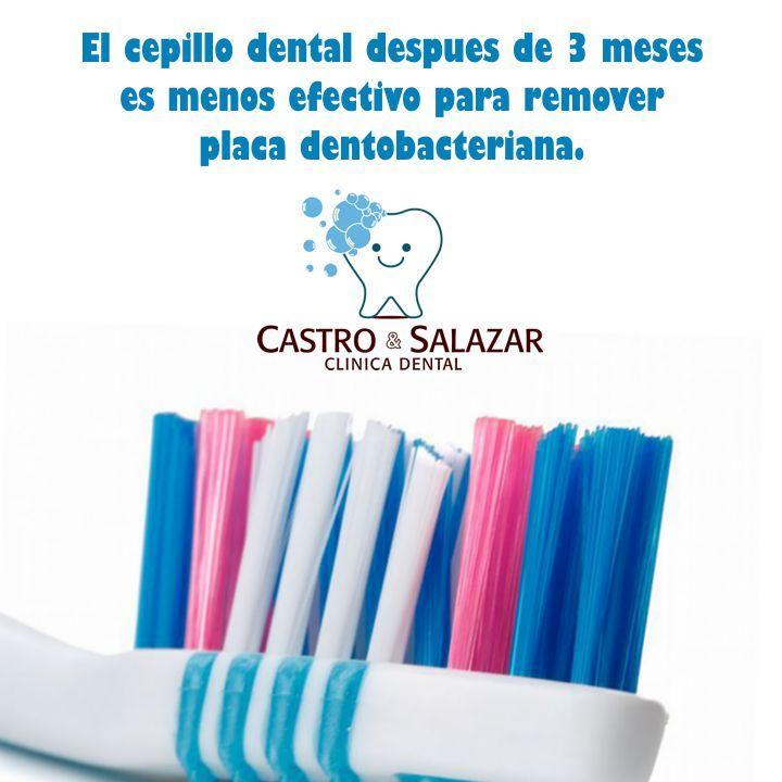 Recuerda siempre cambiar tu cepillo cada 3 meses de usos.