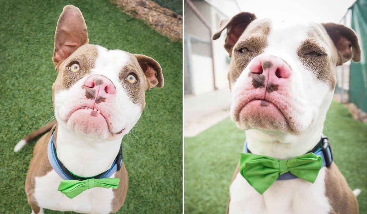 Shelton the shelter dog Grumpy dog, Shelter dogs, Dog