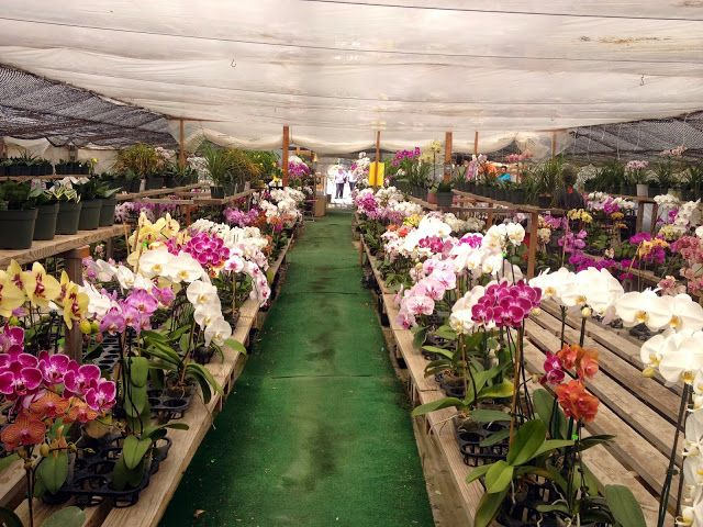 Orchids For Sale Yerba Buena Nursery Half Moon Bay California Travel Around The World Orchids Around The Worlds