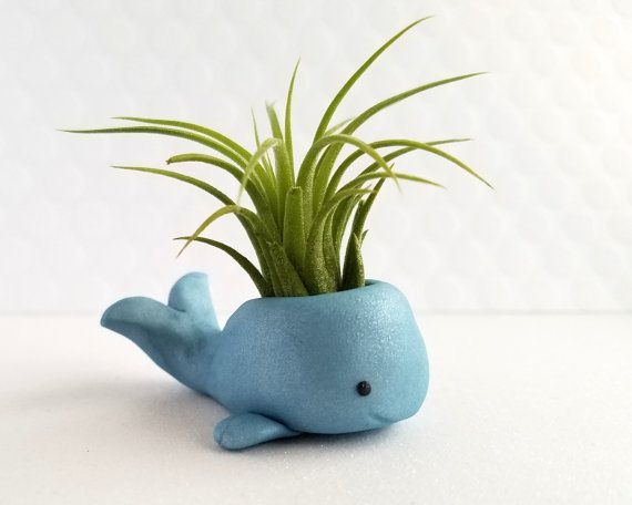 Whale Air Plant Holder, Air Planter, Whale Decor, Best of Fall, Air Plant Gift, Desk Accessory, Blue Whale Gift, Birthday Gift, Planter Gift is part of Plant decor Desk - These little blue whale air plant holders come with a plant already attached and care instructions as well   The whale is approx 1  tall and 2  from nose to tail  This listing is for ONE (1) BLUE polymer clay whale air plant holder   The air plants are between 2  & 3  tall and come with care instructions but please feel free to message with any questions prior to purchase  They are baby air plants, and they will grow well and fill out if cared for properly   The whale is handmade from polymer clay and is waterproof  Because they are handmade, each whale may vary slighting in shape and features  Plants will also vary in size and shape  Domestic shipping to the US only   We are not responsible for the air plant once it is in your care  I guarantee that they are happy, healthy plants but will not be held responsible if the plant dies  I will offer a replacement plant in the event that your plant dies within the first 2 weeks of receiving it   Pen, Washi Tape, and Paperclips are NOT included and just used to show size Colors may vary slightly due to the way they are shown on different monitors or camera lighting, but these pictures represent colors as close as possible   Illustrations © Fun Usual Suspects Sharing a photo of something you purchased from us  Use the hashtag funusualsuspects so we can see it! We love seeing our suspects in all kinds of funusual places!