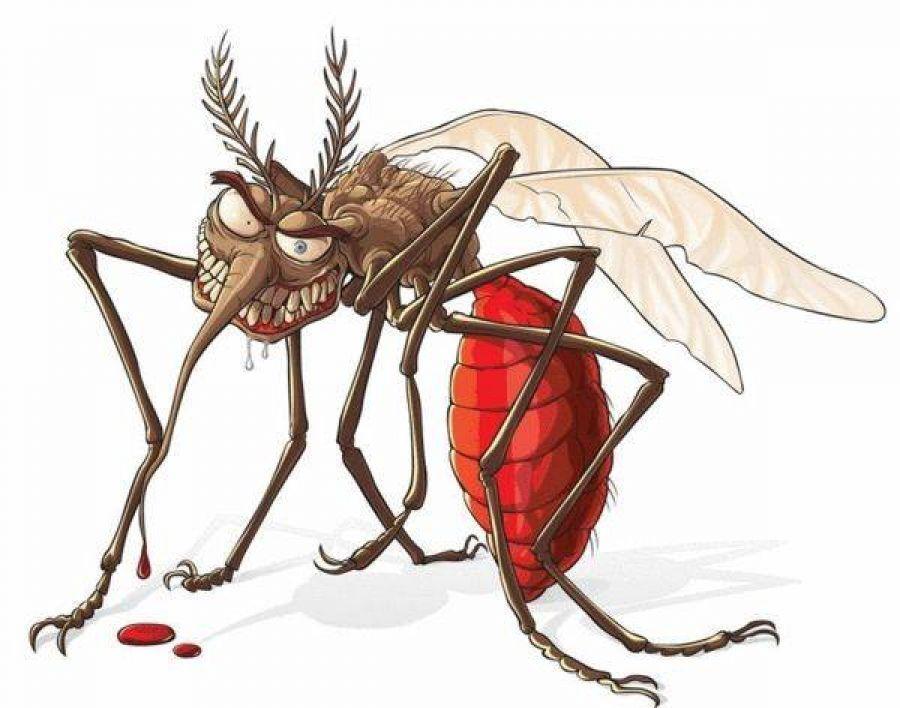 Vyrobte si domáce bio repelenty, ktoré vás ochránia pred otravnými komármi