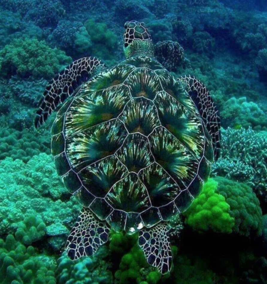 The Patterns On This Turtle S Shellhttps I Redd It Mg4obxr36mx31 Png Green Sea Turtle Sea Turtle Turtle Shell