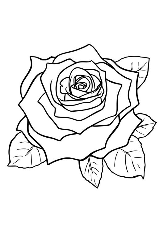 Coloring Page Rose Coloring Picture Rose Free Coloring Sheets To Print And Download Images For School Rose Outline Tattoo Rose Coloring Pages Roses Drawing