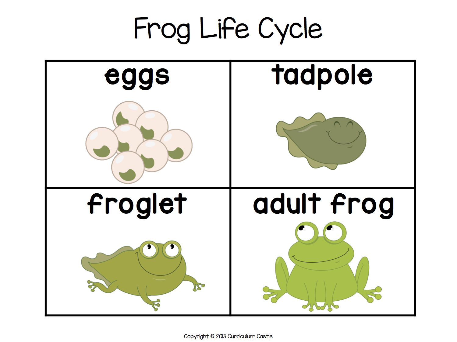 Frog Life Cycle Worksheet Sequencing