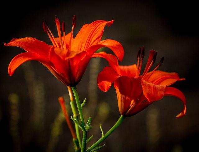 Garden Fireworks   Flickr - Photo Sharing!