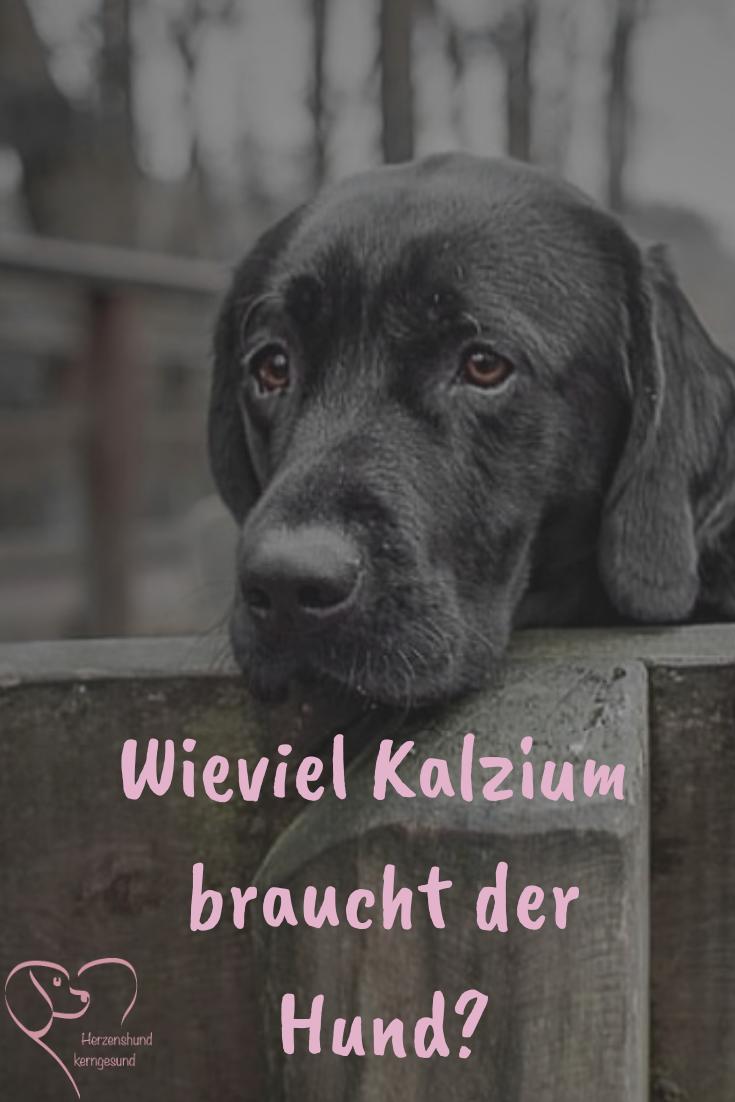 Wieviel Kalzium Braucht Der Hund Hunde Hunde Ernahrung Gesunde Hunde