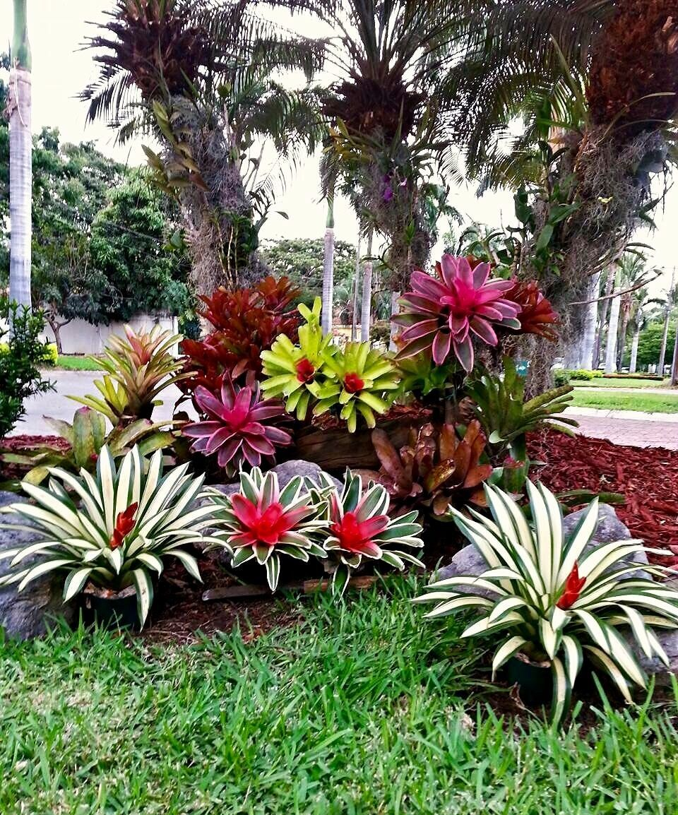 South Florida Tropical Landscape Ideas Planter Container: Plants That Thrive In South Florida €� Artofit