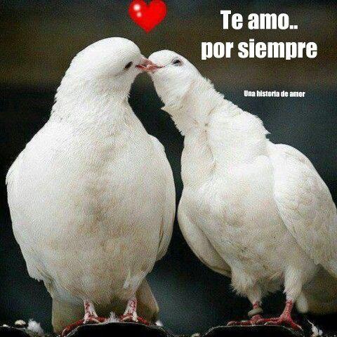Una Historia De Amor Fotos De Palomas Fotos Animadas De Amor Dibujos De Aves