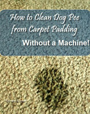 how to clean your carpet without a carpet cleaner
